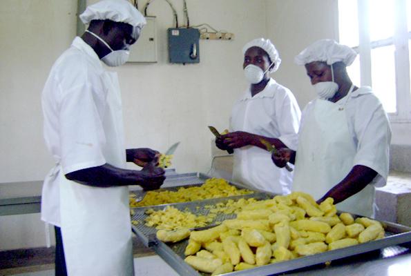 Presidential banana initiative